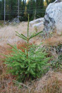 Tilskudd fra skogbrukets rentemidler – søknadsfrist 1. november