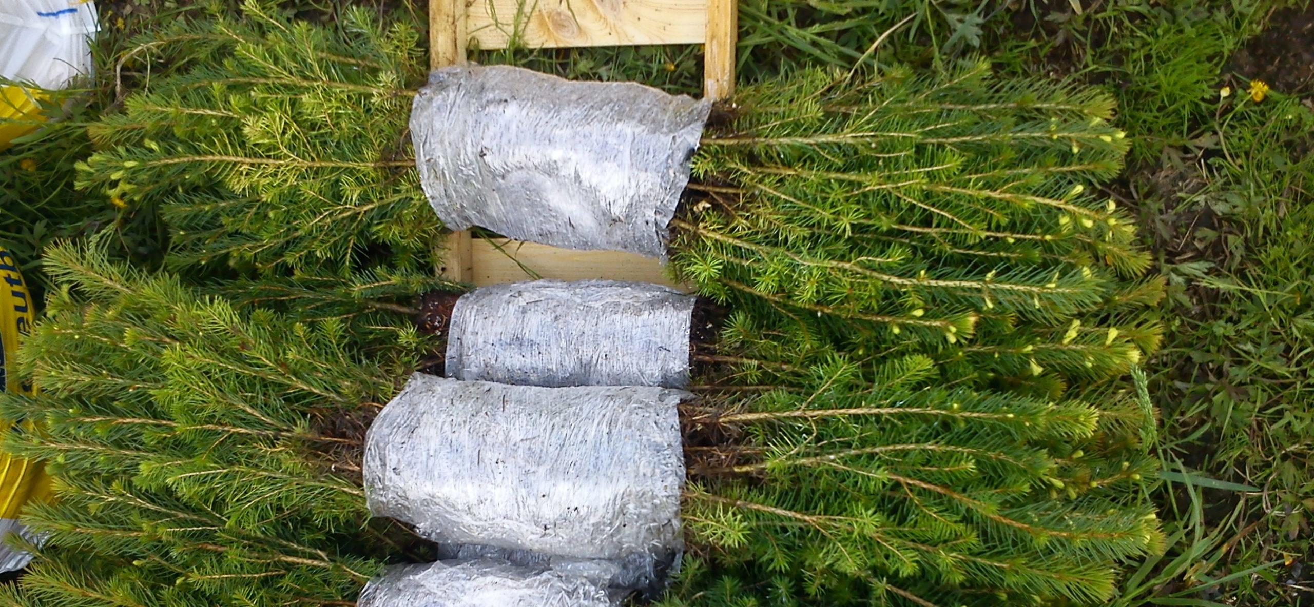 Rekordhøg skogkulturaktivitet i Innlandet i 2020