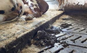 Vil du levere husdyrgjødsel til biogass?