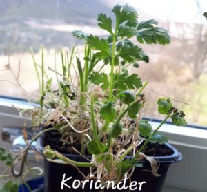 Kurs i oppal av planter – påmeldingsfrist 4. mai