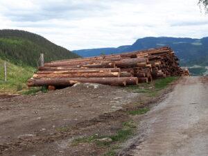 Forlengelse av driftstilskudd i skogbruket